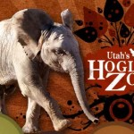 Hogle Zoo Discount Code – Save 15% on New and Renewal Memberships!