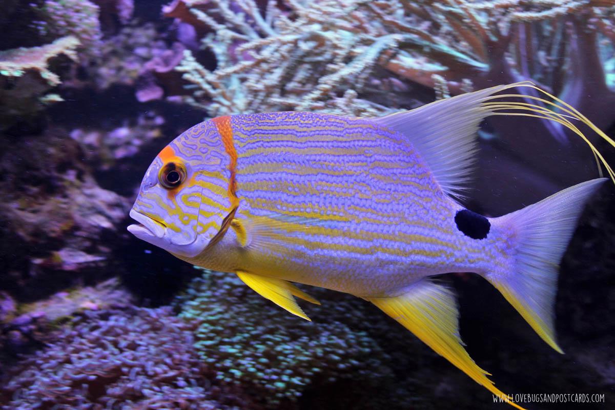 aquariumasiafish