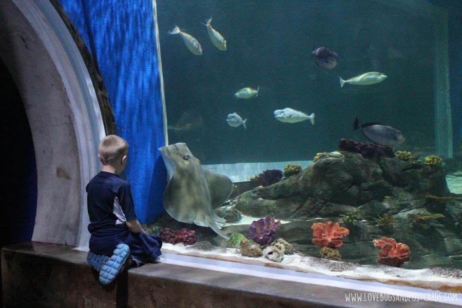aquariumoceansharktank2