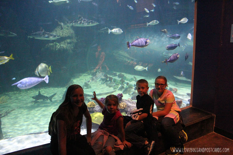 aquariumoceansharktank3