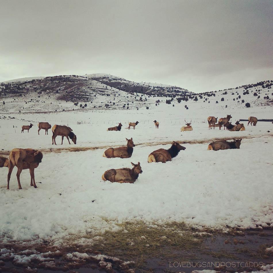 Hardware Ranch Utah