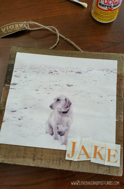 DIY Pet Photo Board